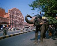 風の宮殿 ジャイプール 1月 ラジャスタン州 インド