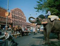 象と風の宮殿 ジャイプール インド
