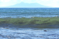 サケ 遡上前の波間 25851006230| 写真素材・ストックフォト・画像・イラスト素材|アマナイメージズ