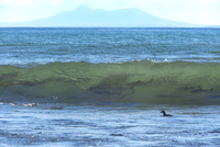 サケ 遡上前の波間 25851006231| 写真素材・ストックフォト・画像・イラスト素材|アマナイメージズ