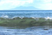 サケ 遡上前の波間
