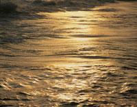 黄金色に輝く海の波  1月