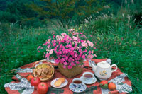 秋のピクニック 25890000113  写真素材・ストックフォト・画像・イラスト素材 アマナイメージズ