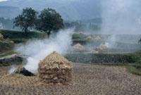 稲刈後の焼田 25890000211  写真素材・ストックフォト・画像・イラスト素材 アマナイメージズ