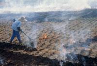 焼き畑の田んぼ 25890000233  写真素材・ストックフォト・画像・イラスト素材 アマナイメージズ