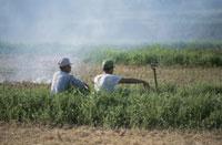 田圃で休憩するおじさん 25890000612  写真素材・ストックフォト・画像・イラスト素材 アマナイメージズ