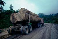 熱帯雨林から切り出す材木 25890001125  写真素材・ストックフォト・画像・イラスト素材 アマナイメージズ