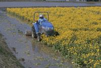 菜の花畑とトラクター 25890001204  写真素材・ストックフォト・画像・イラスト素材 アマナイメージズ