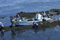 ヒジキ狩りの船 25890001706  写真素材・ストックフォト・画像・イラスト素材 アマナイメージズ