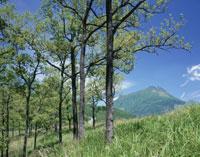 くぬぎ林新緑と由布岳 25905001648| 写真素材・ストックフォト・画像・イラスト素材|アマナイメージズ