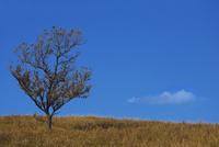 阿蘇外輪山のクヌギの木と雲 25905027095| 写真素材・ストックフォト・画像・イラスト素材|アマナイメージズ