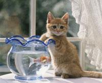 金魚と仔ねこ