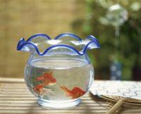 金魚ばち 25918015628| 写真素材・ストックフォト・画像・イラスト素材|アマナイメージズ