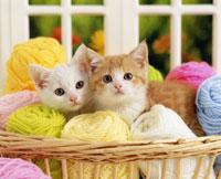毛糸玉と仔ネコ2匹