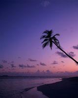 夕焼けの海とヤシ 25920008660| 写真素材・ストックフォト・画像・イラスト素材|アマナイメージズ