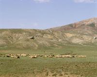 放牧 25920011127| 写真素材・ストックフォト・画像・イラスト素材|アマナイメージズ