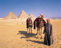 ギザの三大ピラミッドとラクダ