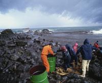 重油汚染除去作業 三国町安島岬 ロシアのタンカー 25925000952| 写真素材・ストックフォト・画像・イラスト素材|アマナイメージズ