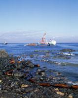 ナホトカ号の重油汚染