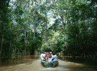 アマゾン河ジャングル