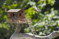 飛翔するヤマガラとログハウスの巣箱