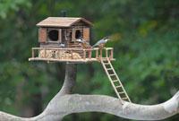 二羽のヤマガラとログハウスの巣箱