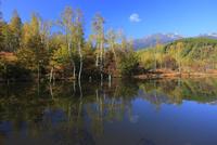 紅葉のまいめの池と乗鞍岳