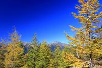 黄葉と北岳