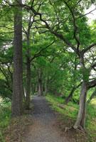 浮野の里のクヌギ並木遊歩道 25977003883| 写真素材・ストックフォト・画像・イラスト素材|アマナイメージズ
