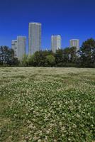 新緑の公園とタワーマンション