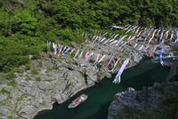 大歩危渓谷の遊覧船と鯉のぼり 25977009291| 写真素材・ストックフォト・画像・イラスト素材|アマナイメージズ