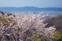 眉山の桜 25990016091  写真素材・ストックフォト・画像・イラスト素材 アマナイメージズ