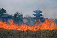 焼畑と法起寺三重塔 25990016856| 写真素材・ストックフォト・画像・イラスト素材|アマナイメージズ