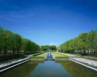 新緑の昭和記念公園のイチョウ並木