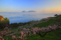 洞爺湖梅林の朝