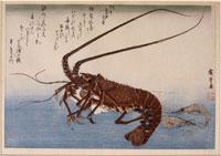 エビ(魚尽くし) 26004018502| 写真素材・ストックフォト・画像・イラスト素材|アマナイメージズ