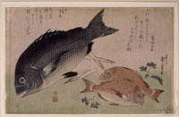 鯛(魚尽くし) 26004018527| 写真素材・ストックフォト・画像・イラスト素材|アマナイメージズ