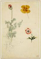 Trois etudes de fleurs, anemone, pensee, ?; vers 1845-1850