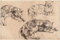 Trois etudes de chats allonges, la tete vers la droite