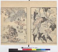 北斎漫画:Fleurs et plantes (volubilis, bigogne, belle-de-jour, lierre en automne)