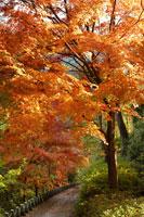 紅葉の高城山の道 26009002121| 写真素材・ストックフォト・画像・イラスト素材|アマナイメージズ