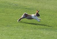 跳ねるウサギ