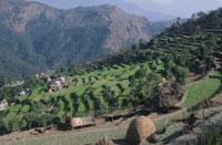 ナウダンダの丘の段々畑 26018001651| 写真素材・ストックフォト・画像・イラスト素材|アマナイメージズ