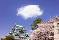桜と名古屋城と雲