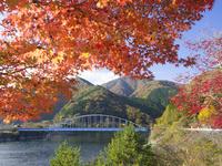 秋の丹沢湖 26033004835  写真素材・ストックフォト・画像・イラスト素材 アマナイメージズ
