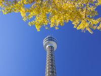 秋の横浜マリンタワー