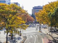 秋の海岸通り 26033005297| 写真素材・ストックフォト・画像・イラスト素材|アマナイメージズ