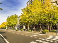 秋の日本大通り 26033005298| 写真素材・ストックフォト・画像・イラスト素材|アマナイメージズ
