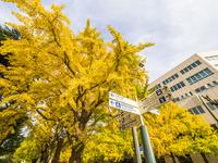 秋の日本大通り 26033005300| 写真素材・ストックフォト・画像・イラスト素材|アマナイメージズ