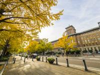 秋の日本大通り 26033005301| 写真素材・ストックフォト・画像・イラスト素材|アマナイメージズ